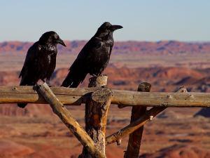 TM-Ravens